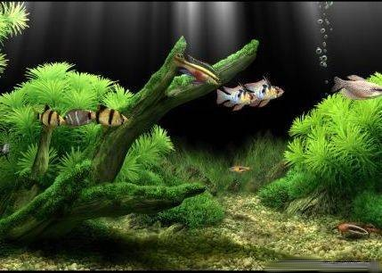 Dream Aquarium 1.2413 Screensaver +crack, ����, ����, �������� ...